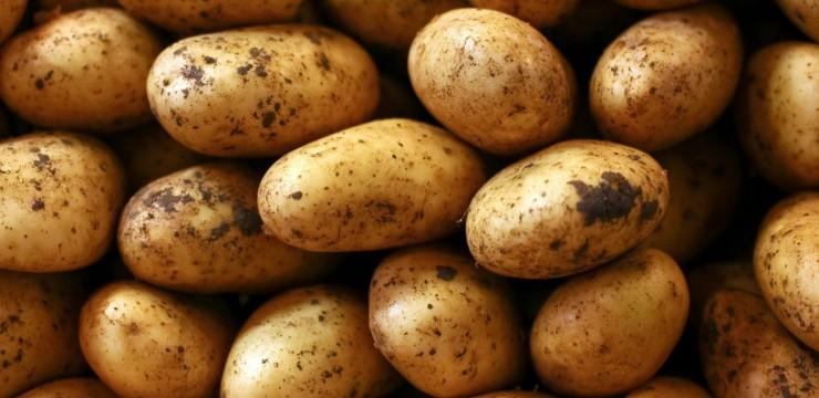 Zemiaky v krmive
